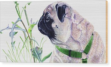 Pug And Nature Wood Print by Patricia Barmatz