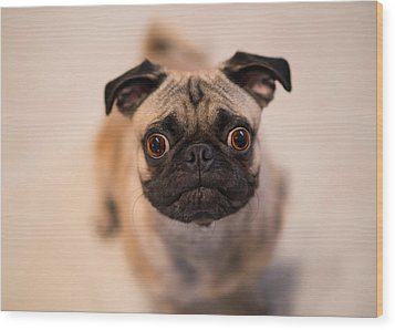 Wood Print featuring the photograph Pug Dog by Laura Fasulo