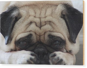 Pug Face Wood Print by Michael Albright