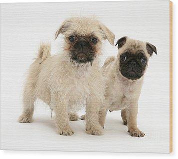 Pugzu And Pug Puppies Wood Print by Jane Burton