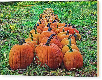 Pumpkin Patch Wood Print by Dale R Carlson
