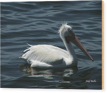 Punk Pelican - Side View Wood Print by Judy  Waller