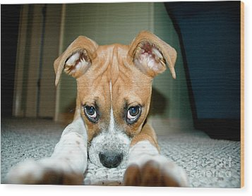 Puppie Dog Eyes Wood Print by Maureen Norcross