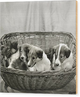 Puppies Of The Past Wood Print by Marilyn Hunt