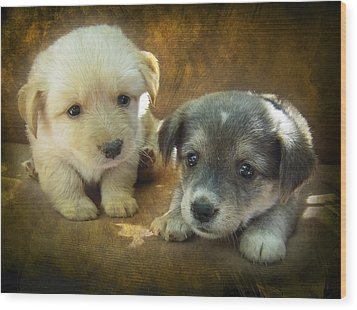 Puppies Wood Print by Svetlana Sewell