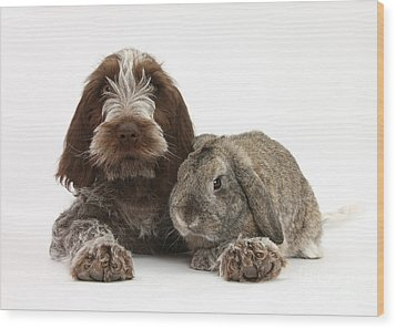Puppy And Rabbt Wood Print by Mark Taylor