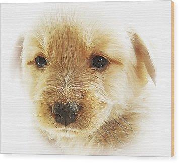 Puppy Art Wood Print by Svetlana Sewell