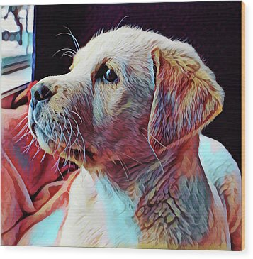 Puppy Dog Wood Print by Gary Grayson