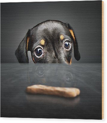 Puppy Longing For A Treat Wood Print by Johan Swanepoel
