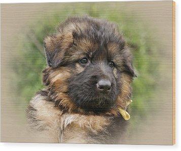 Puppy Portrait II Wood Print by Sandy Keeton