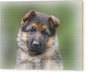 Puppy Portrait Wood Print by Sandy Keeton