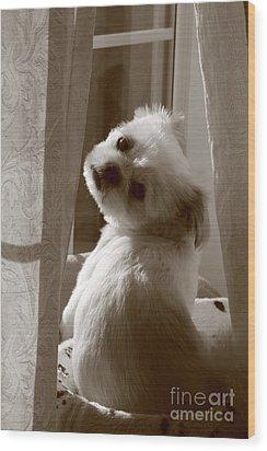 Puppy Pose Wood Print by Lynn Reid