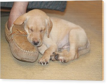 Puppy Sleeping On Daddy's Foot Wood Print
