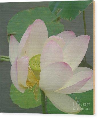 Purity Of The Pink Lotus Wood Print by Renu Anne