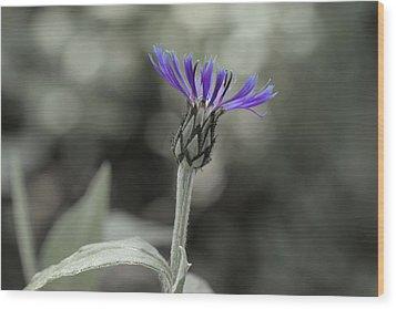 Purple And Grey Wood Print