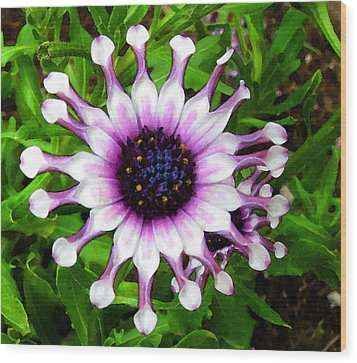 Purple And White Flowers 4  Wc  Wood Print