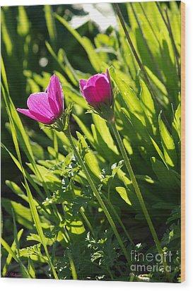 Purple Anemone Wood Print by Arik Baltinester