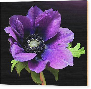 Purple Anemone Flower Wood Print by Gitpix