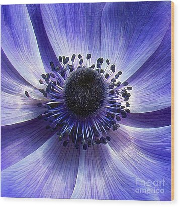 Purple Anemone Macro Wood Print