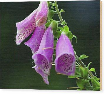 Purple Bells Horizontal Wood Print by Marty Koch