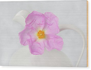Purple Bloom Wood Print