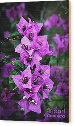 Wood Print featuring the photograph Purple Bougainvillea by Robert Bales