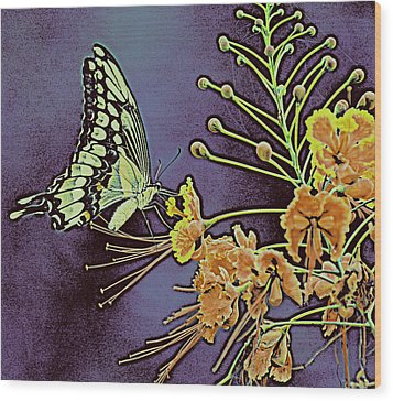 Purple Butterfly  Wood Print by Rose  Hill