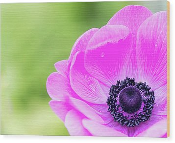 Wood Print featuring the photograph Purple Center by Rebecca Cozart