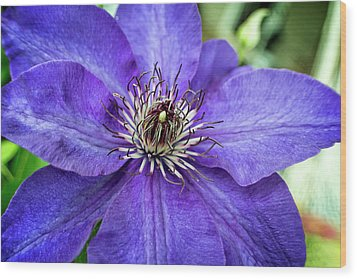 Wood Print featuring the photograph Purple Clematis by Chrystal Mimbs