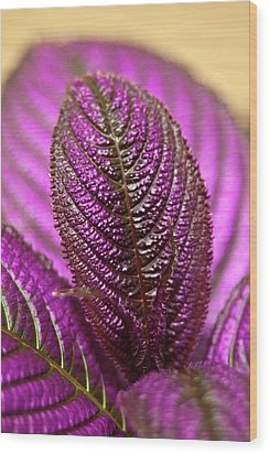 Purple Coleus Wood Print by Carolyn Marshall