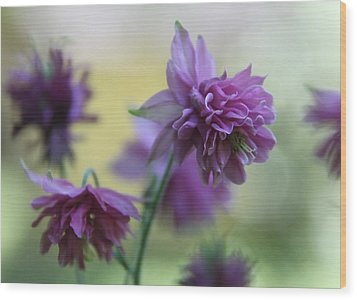 Purple Columbine Wood Print by  Andrea Lazar