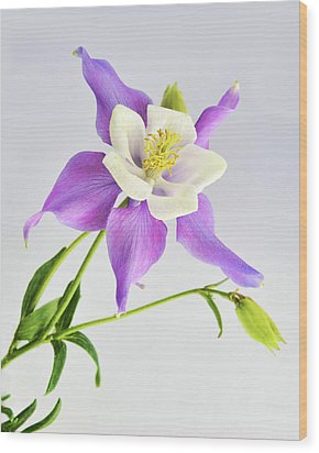 Wood Print featuring the photograph  Purple Columbine by Ann Bridges