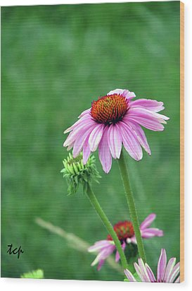 Wood Print featuring the photograph Purple Cone by Traci Cottingham