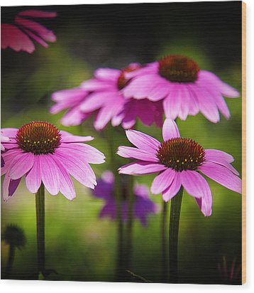 Purple Coneflowers Wood Print