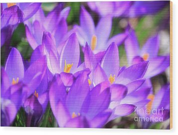 Wood Print featuring the photograph Purple Crocus Flowers by Charline Xia
