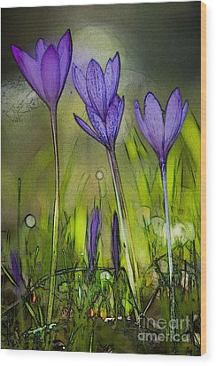 Wood Print featuring the photograph Purple Crocus Flowers by Jean Bernard Roussilhe