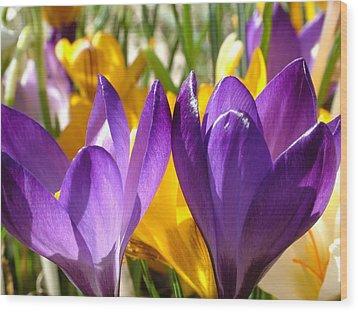 Purple Crocuses Wood Print