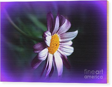 Wood Print featuring the photograph Purple Daisy Flower by Susanne Van Hulst