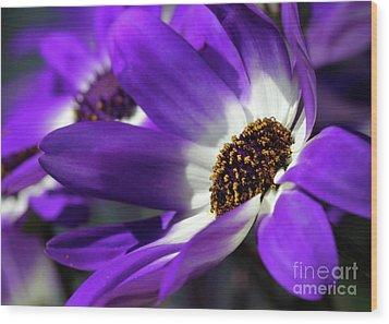 Purple Daisy Wood Print by Sabrina L Ryan