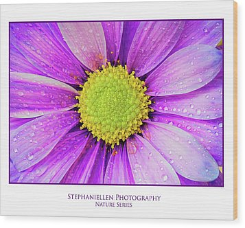 Purple Daisy Wood Print by Stephanie Hayes