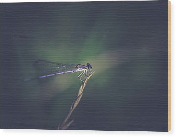 Wood Print featuring the photograph Purple Damsel by Shane Holsclaw
