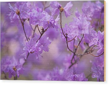 Wood Print featuring the photograph Purple Delight. Spring Watercolors by Jenny Rainbow