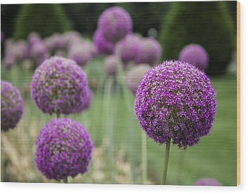 Wood Print featuring the photograph Purple Depth by Jason Moynihan
