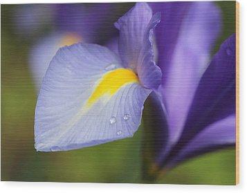 Purple Dutch Iris Flower Macro Wood Print by Jennie Marie Schell