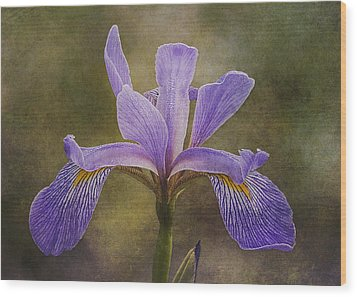 Purple Flag Iris Wood Print by Patti Deters