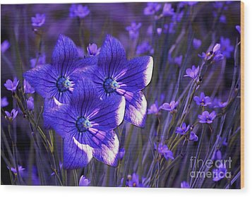 Purple Florwer Abstract Wood Print by Marjorie Imbeau
