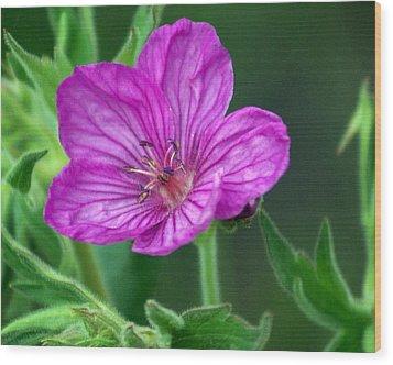 Purple Flower 2 Wood Print by Marty Koch
