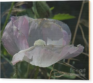 Purple Flower 4 Wood Print