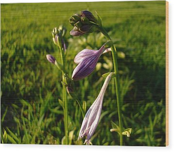 Purple Flower Wood Print by Ali Dover