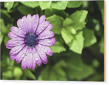 Purple Flower On Green Wood Print